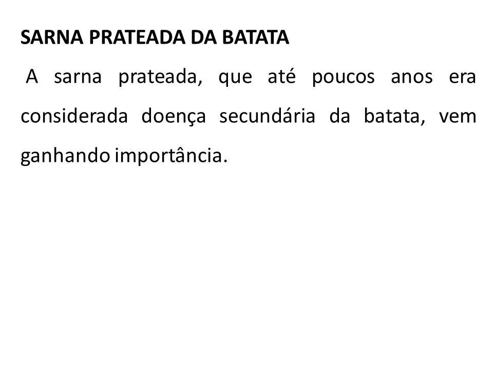 SARNA PRATEADA DA BATATA