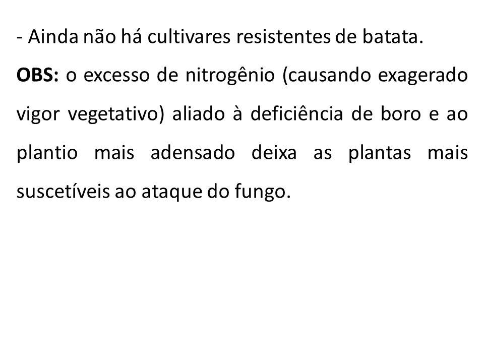Ainda não há cultivares resistentes de batata.