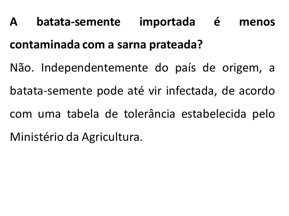 A batata-semente importada é menos contaminada com a sarna prateada