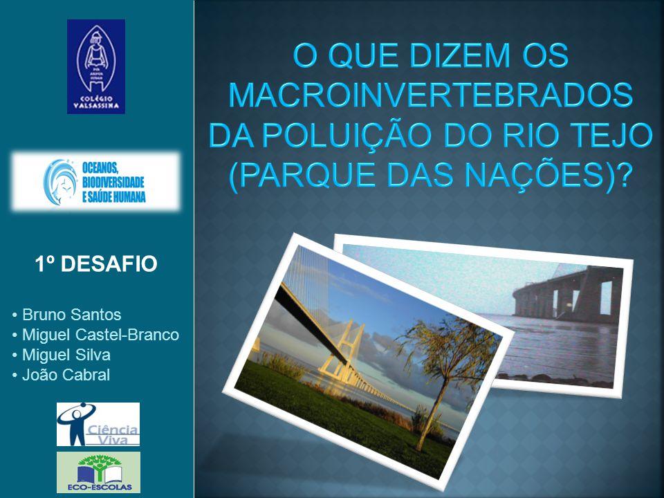 O QUE DIZEM OS MACROINVERTEBRADOS DA POLUIÇÃO DO RIO TEJO (PARQUE DAS NAÇÕES)
