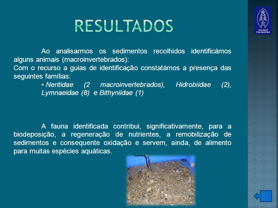 resultados Ao analisarmos os sedimentos recolhidos identificámos alguns animais (macroinvertebrados):