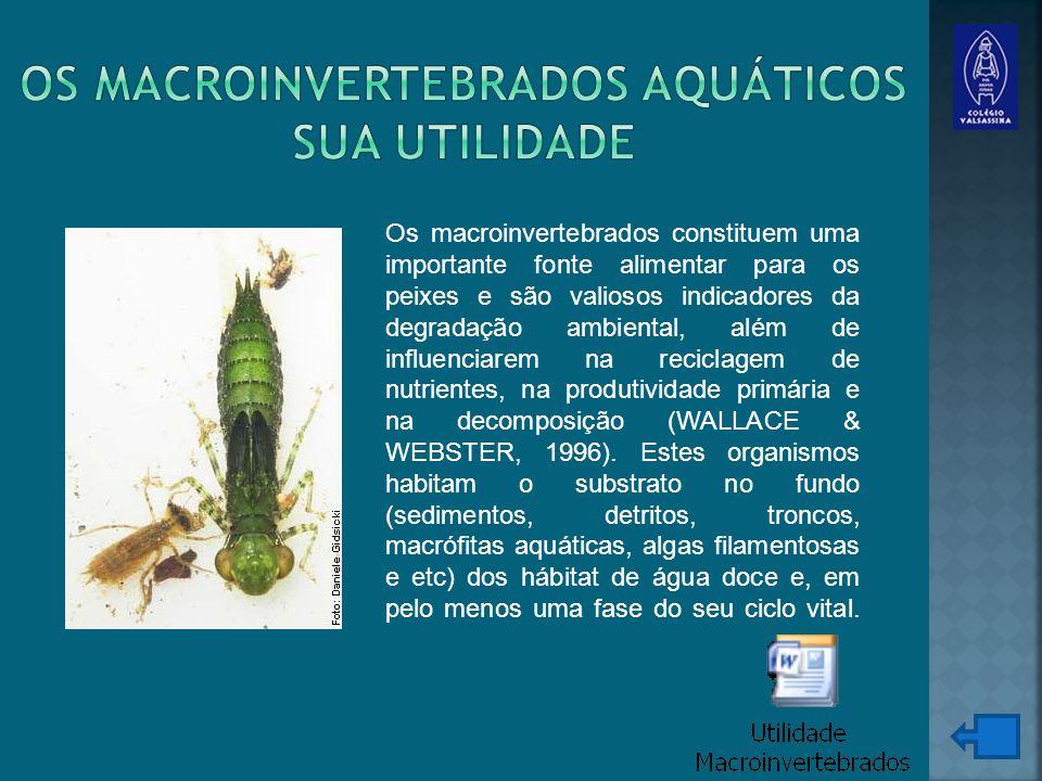 Os macroinvertebrados aquáticos sua utilidade