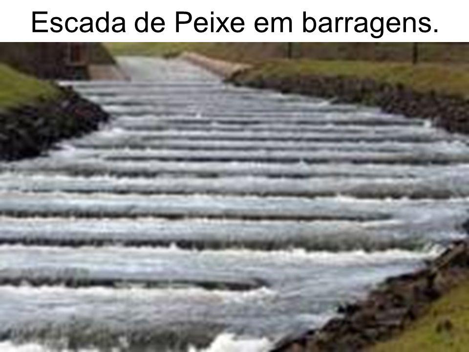 Escada de Peixe em barragens.