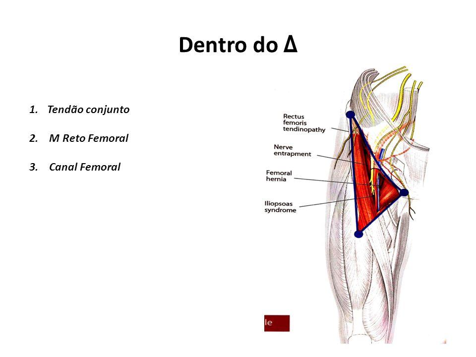 Dentro do Δ Tendão conjunto 2. M Reto Femoral 3. Canal Femoral
