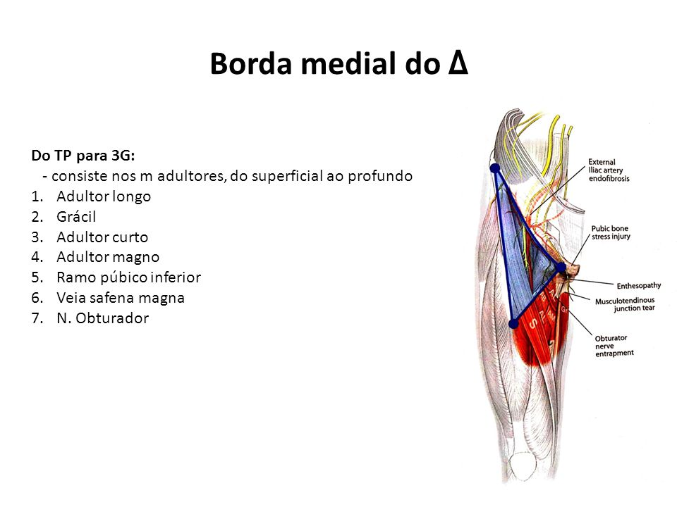 Borda medial do Δ Do TP para 3G: