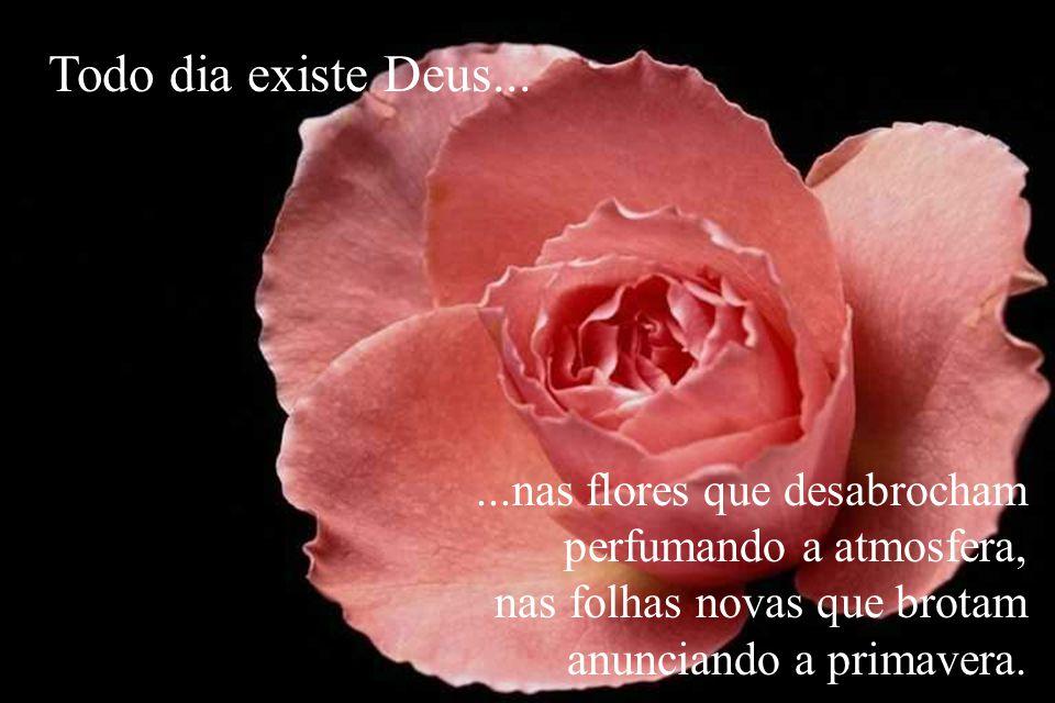 Todo dia existe Deus... ...nas flores que desabrocham