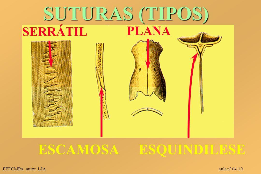 SUTURAS (TIPOS) ESCAMOSA ESQUINDILESE SERRÁTIL PLANA