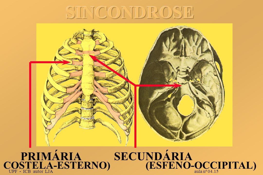 SINCONDROSE PRIMÁRIA SECUNDÁRIA COSTELA-ESTERNO) (ESFENO-OCCIPITAL)