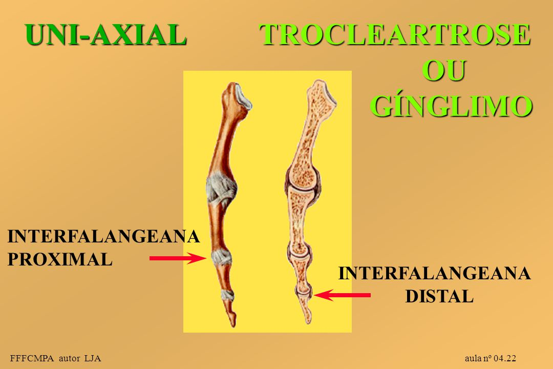 UNI-AXIAL TROCLEARTROSE OU GÍNGLIMO