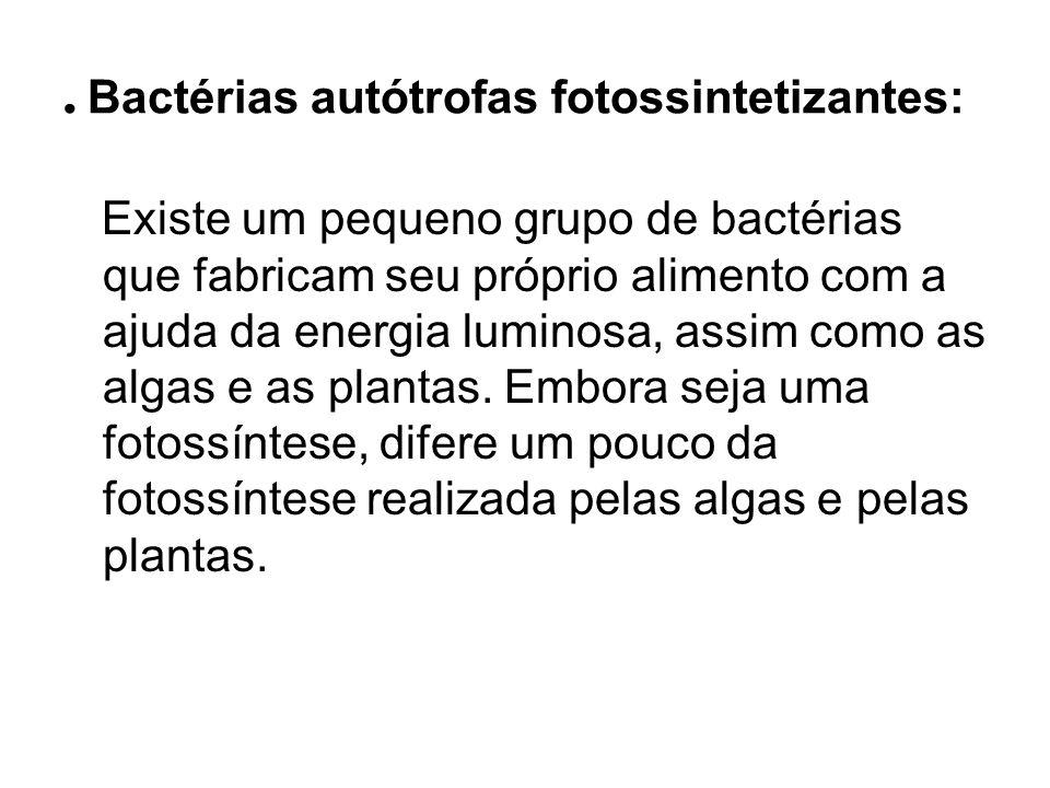. Bactérias autótrofas fotossintetizantes: