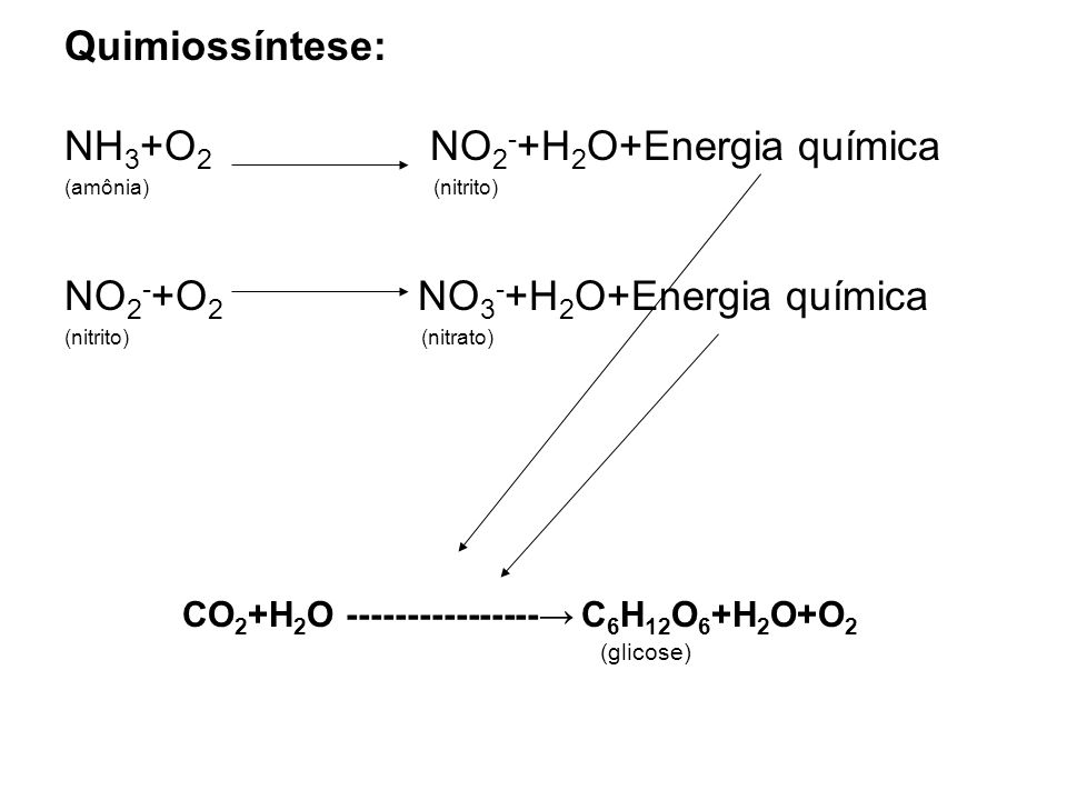 NH3+O2 NO2-+H2O+Energia química