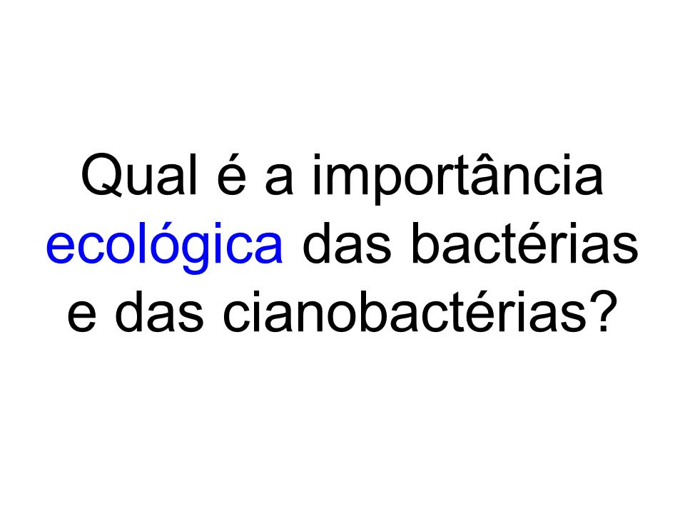Qual é a importância ecológica das bactérias e das cianobactérias