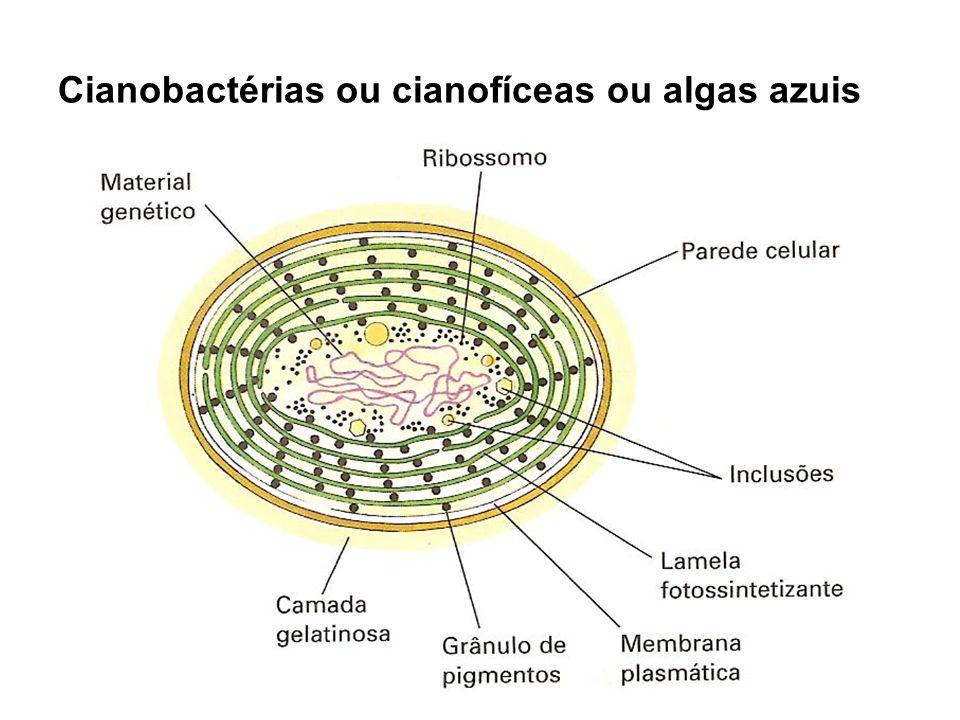 Cianobactérias ou cianofíceas ou algas azuis