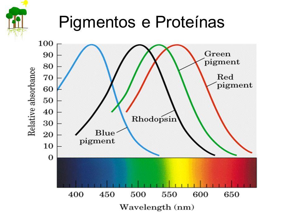 Pigmentos e Proteínas