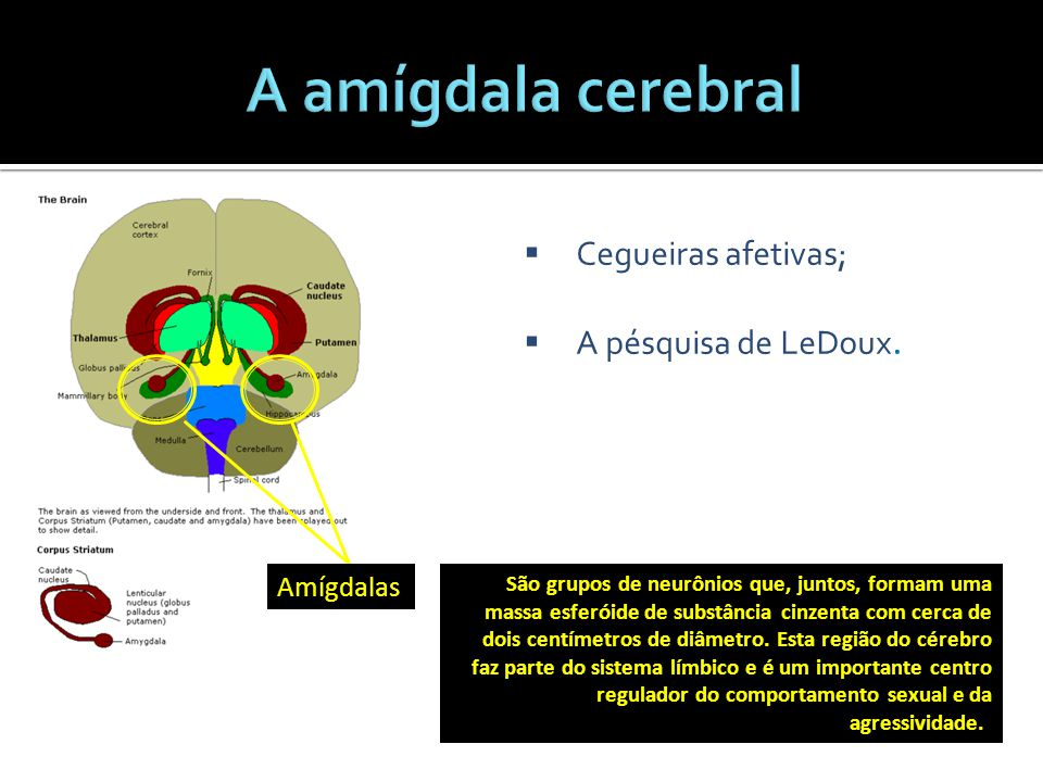 A amígdala cerebral Cegueiras afetivas; A pésquisa de LeDoux.