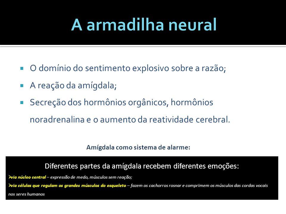 Diferentes partes da amígdala recebem diferentes emoções:
