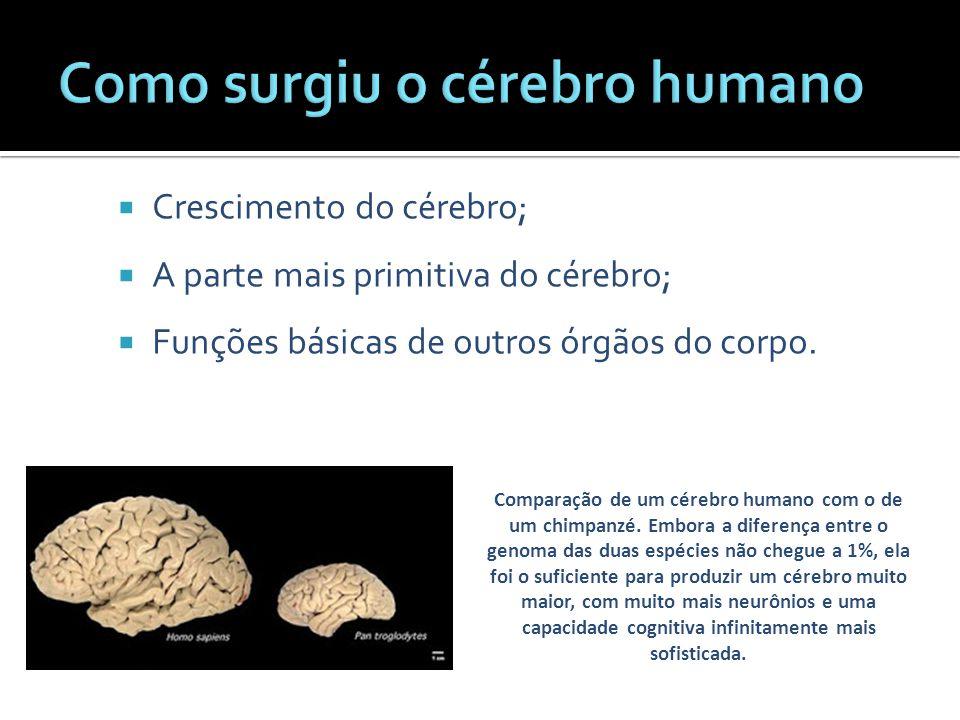 Como surgiu o cérebro humano
