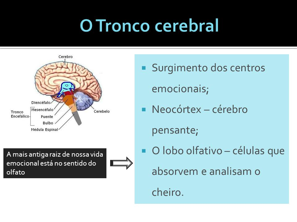 O Tronco cerebral Surgimento dos centros emocionais;