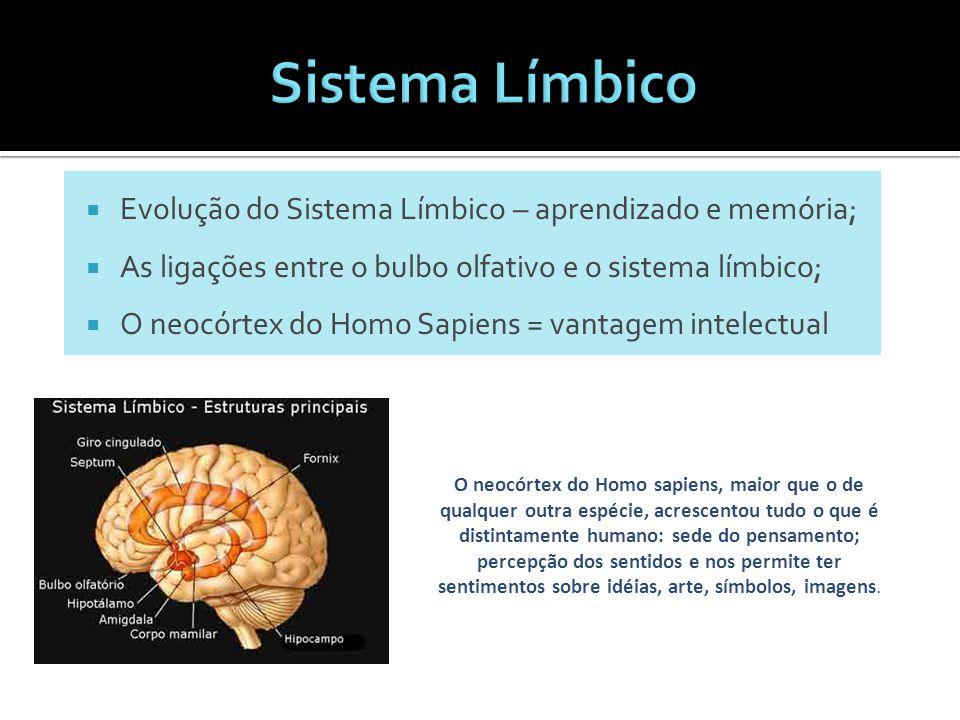 Sistema Límbico Evolução do Sistema Límbico – aprendizado e memória;