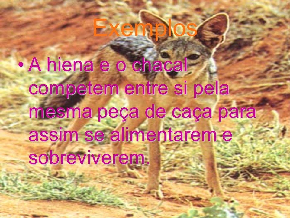 Exemplos A hiena e o chacal competem entre si pela mesma peça de caça para assim se alimentarem e sobreviverem.