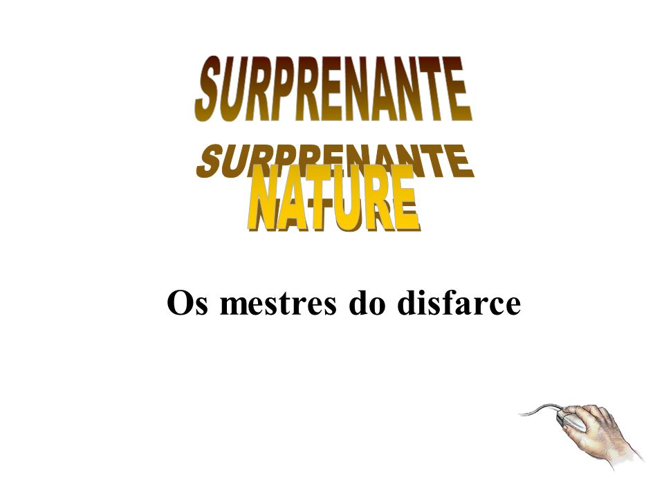 SURPRENANTE NATURE Os mestres do disfarce