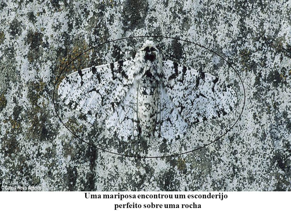 Uma mariposa encontrou um esconderijo perfeito sobre uma rocha