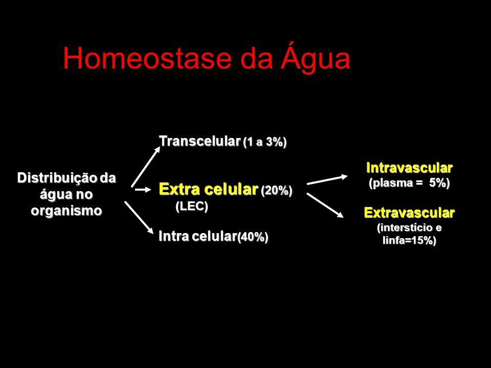 (interstício e linfa=15%) Distribuição da água no organismo