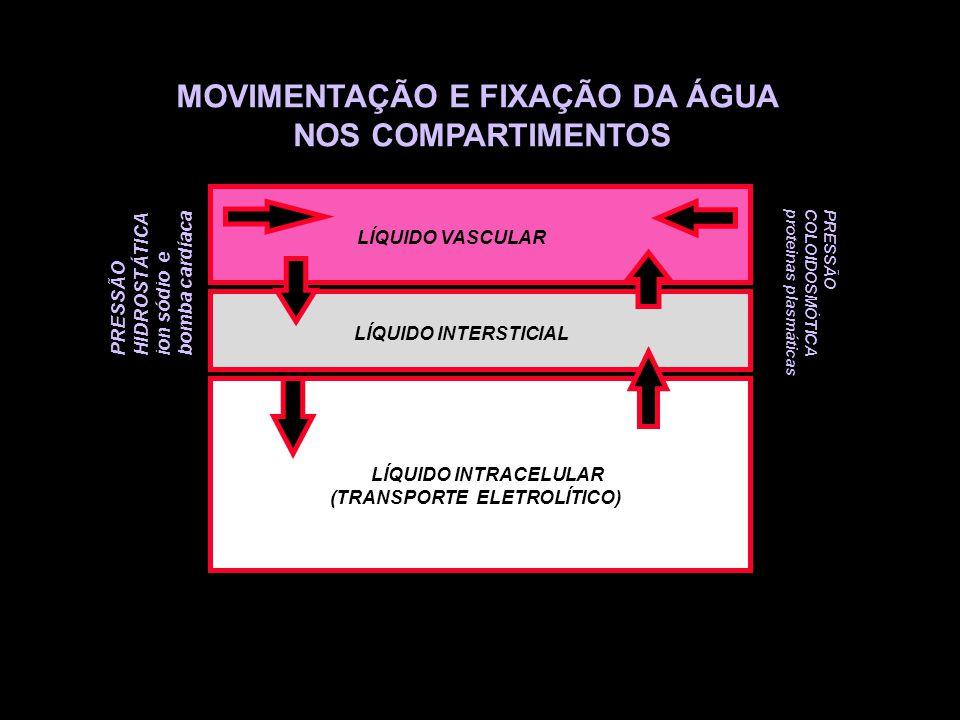 MOVIMENTAÇÃO E FIXAÇÃO DA ÁGUA