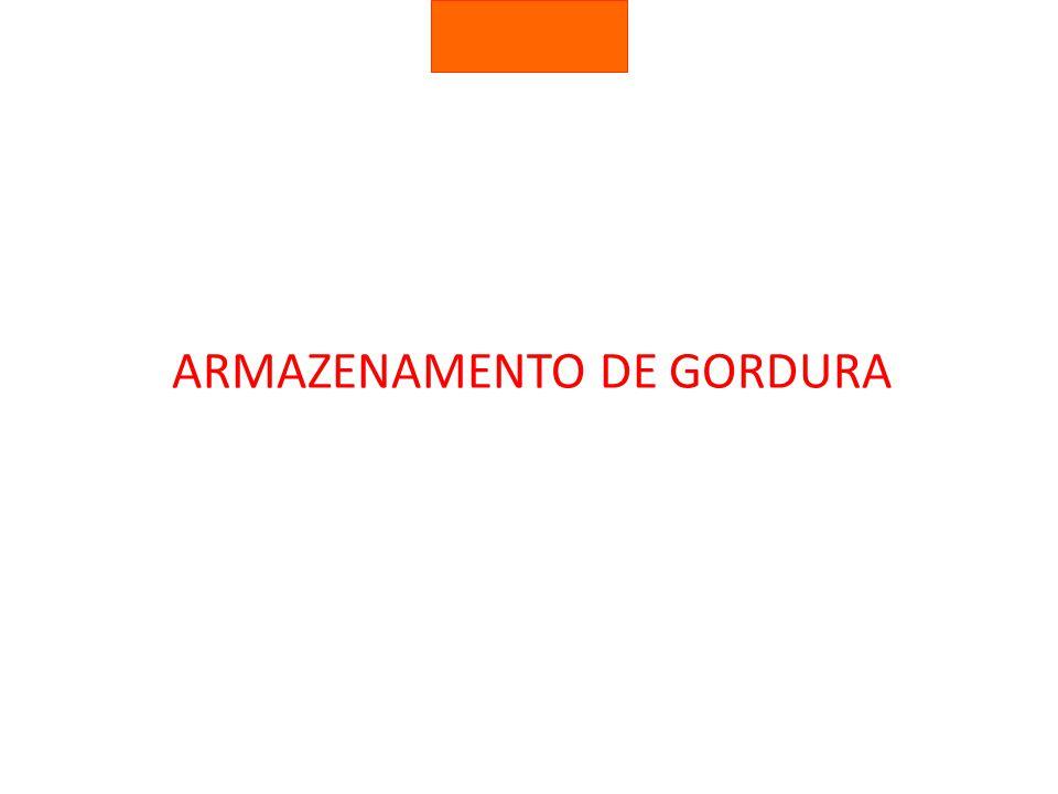 ARMAZENAMENTO DE GORDURA