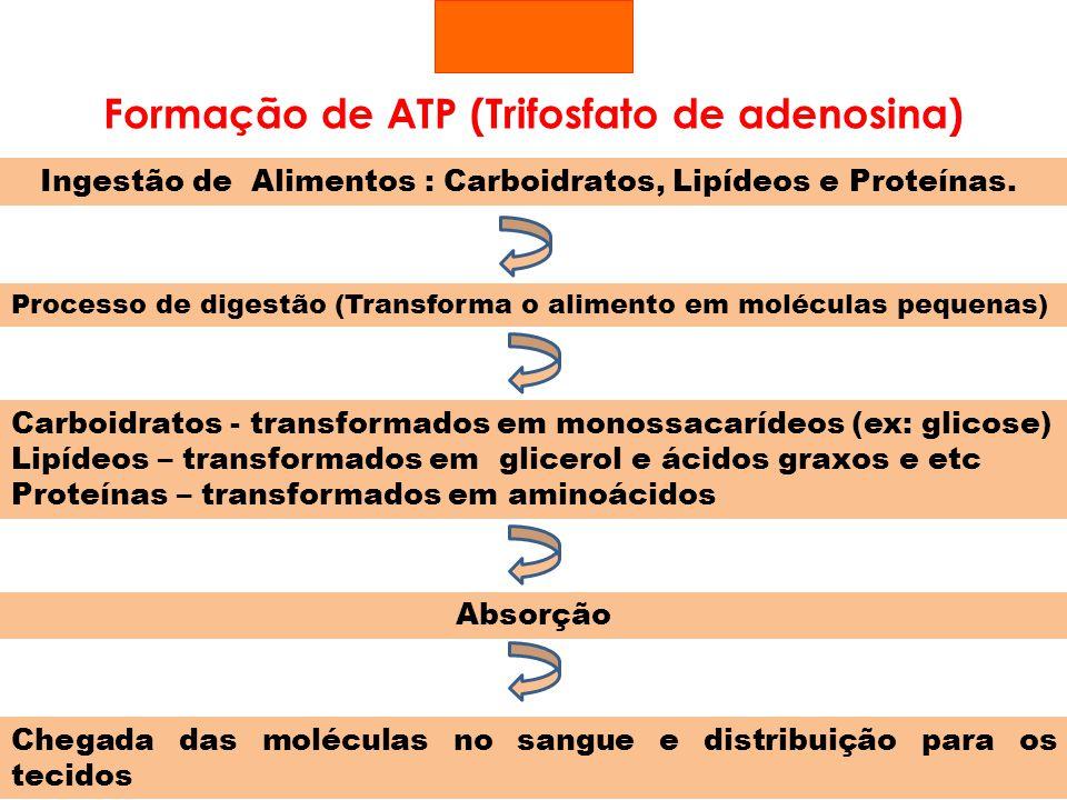 Formação de ATP (Trifosfato de adenosina)