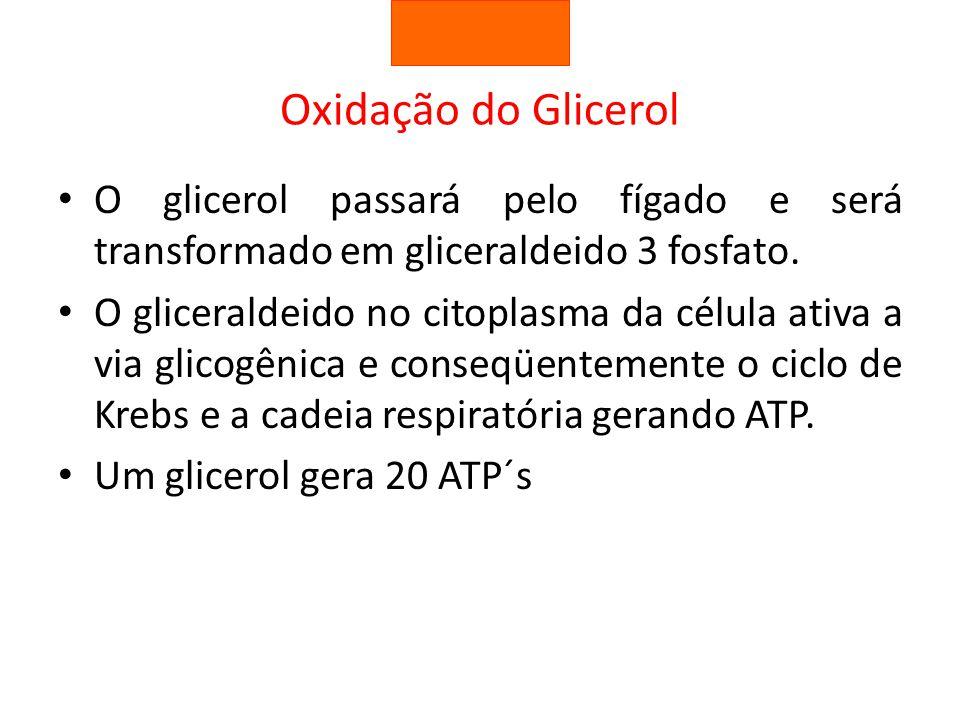 Oxidação do Glicerol O glicerol passará pelo fígado e será transformado em gliceraldeido 3 fosfato.