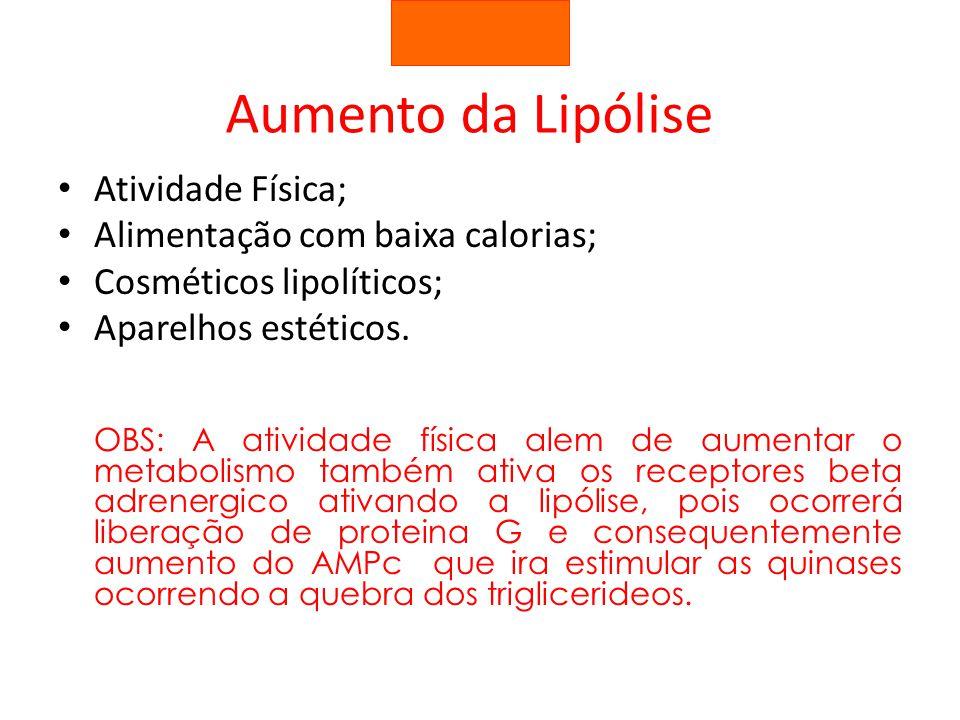 Aumento da Lipólise Atividade Física; Alimentação com baixa calorias;
