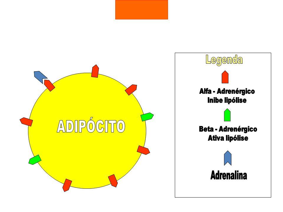 ADIPÓCITO Legenda Adrenalina Alfa - Adrenérgico Inibe lipólise