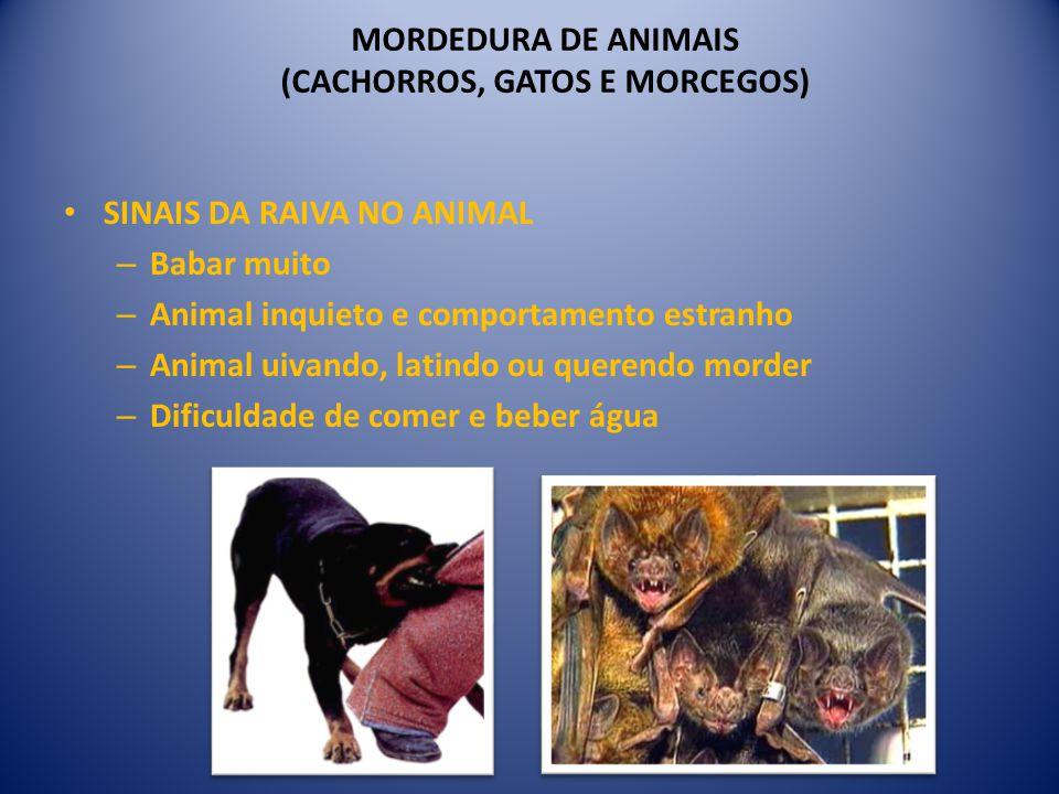 MORDEDURA DE ANIMAIS (CACHORROS, GATOS E MORCEGOS)