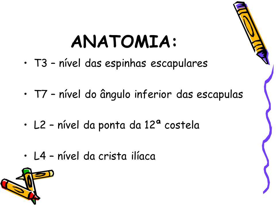ANATOMIA: T3 – nível das espinhas escapulares