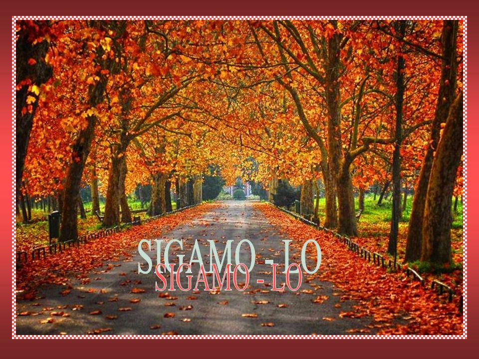 SIGAMO - LO