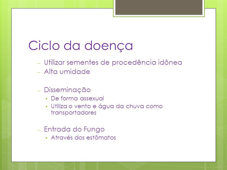 Ciclo da doença Utilizar sementes de procedência idônea Alta umidade
