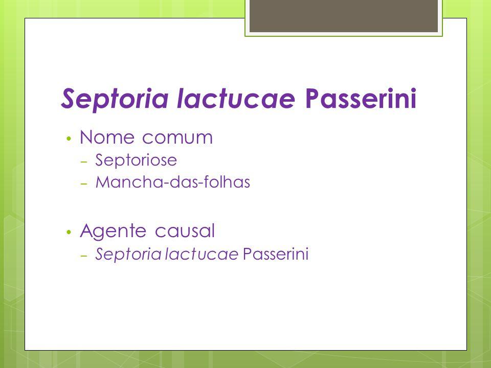 Septoria lactucae Passerini