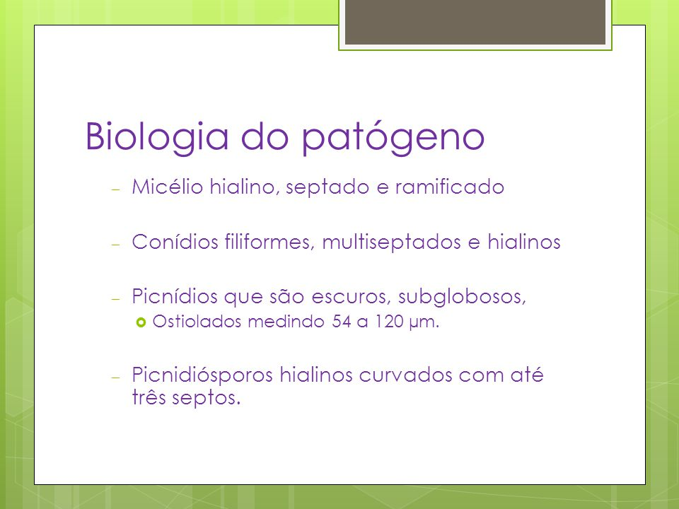 Biologia do patógeno Micélio hialino, septado e ramificado