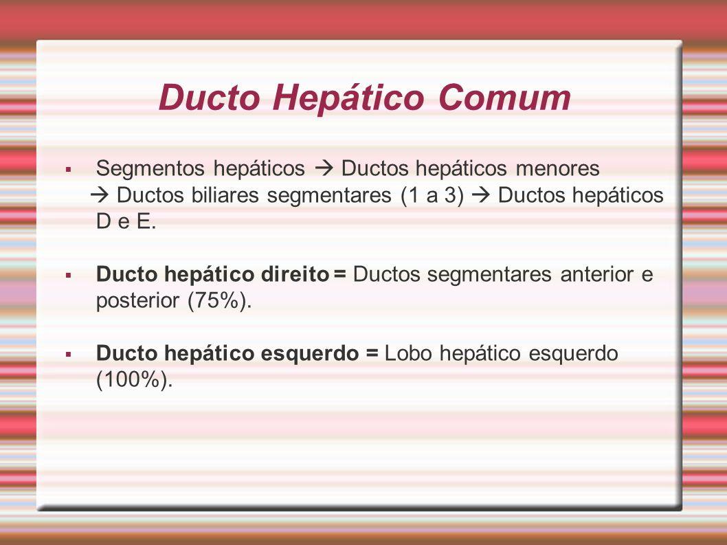 Ducto Hepático Comum Segmentos hepáticos  Ductos hepáticos menores