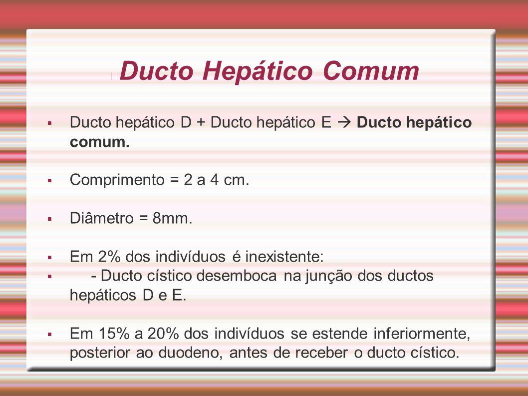 Ducto Hepático Comum Ducto hepático D + Ducto hepático E  Ducto hepático comum. Comprimento = 2 a 4 cm.