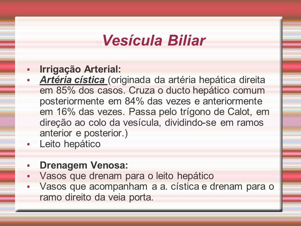 Vesícula Biliar Irrigação Arterial: