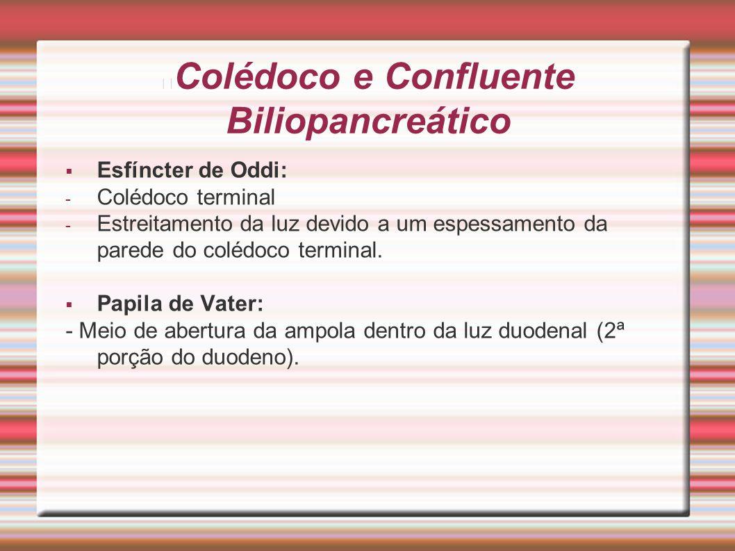 Colédoco e Confluente Biliopancreático