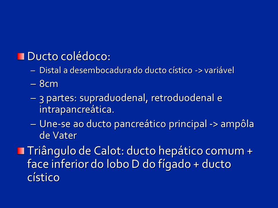 Ducto colédoco: Distal a desembocadura do ducto cístico -> variável. 8cm. 3 partes: supraduodenal, retroduodenal e intrapancreática.