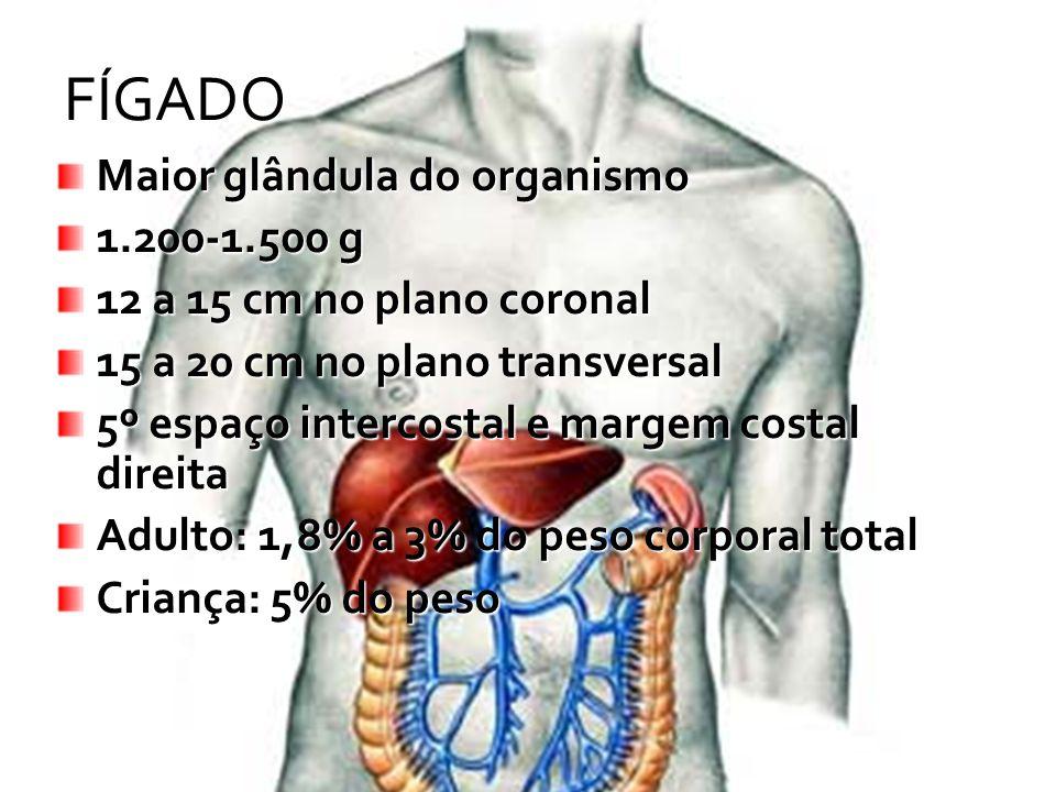 FÍGADO Maior glândula do organismo 1.200-1.500 g