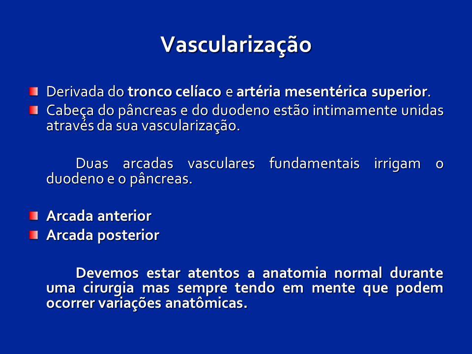Vascularização Derivada do tronco celíaco e artéria mesentérica superior.