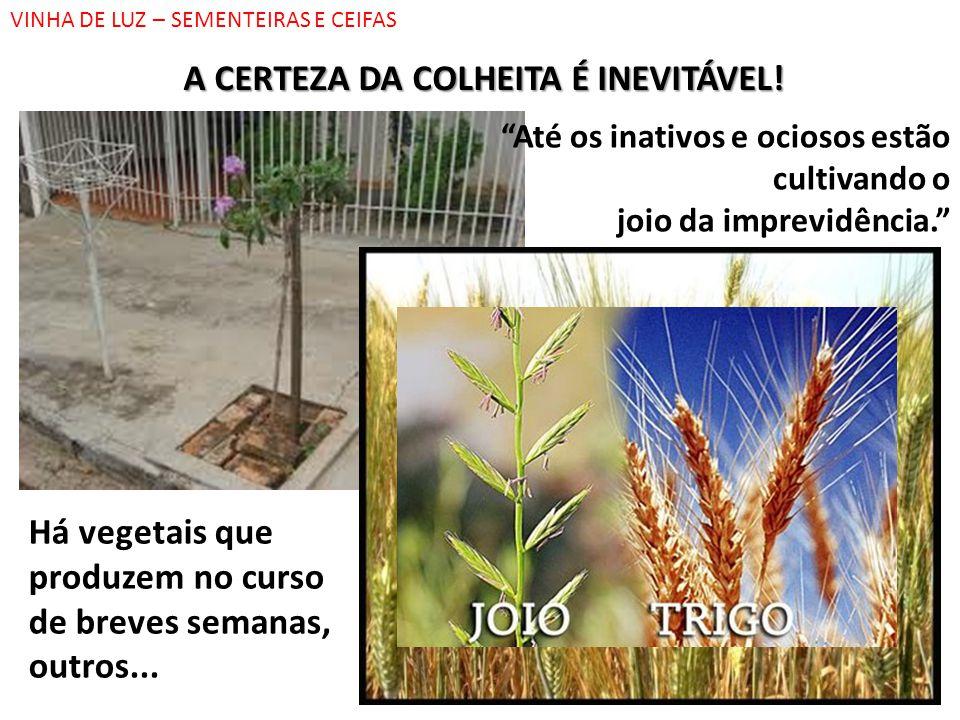 A CERTEZA DA COLHEITA É INEVITÁVEL!