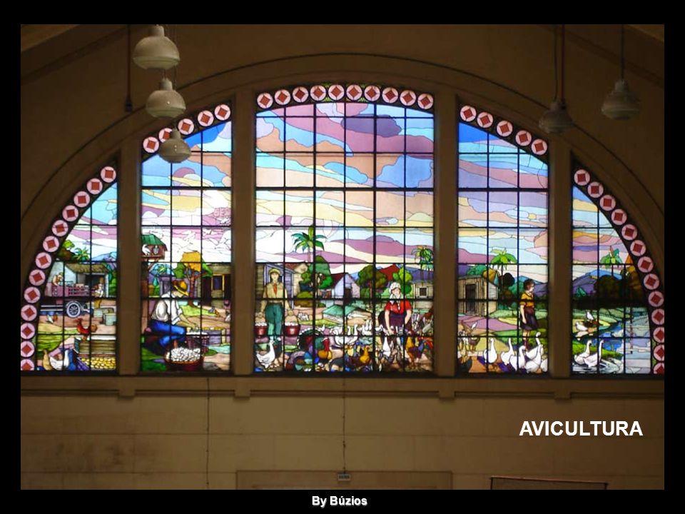 AVICULTURA By Búzios