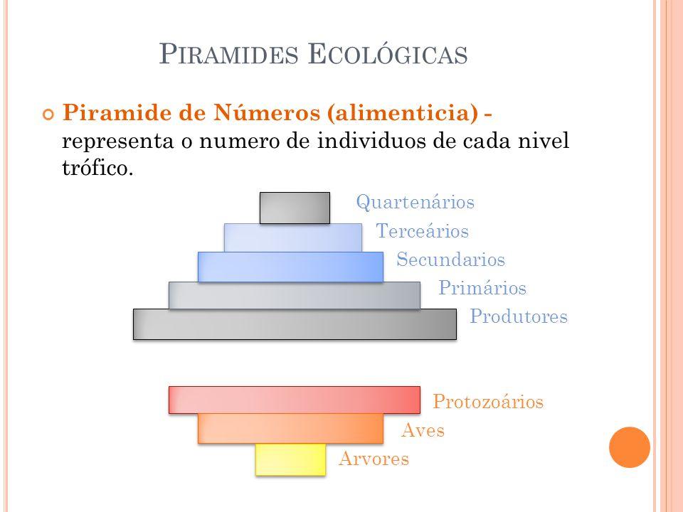 Piramides Ecológicas Piramide de Números (alimenticia) - representa o numero de individuos de cada nivel trófico.