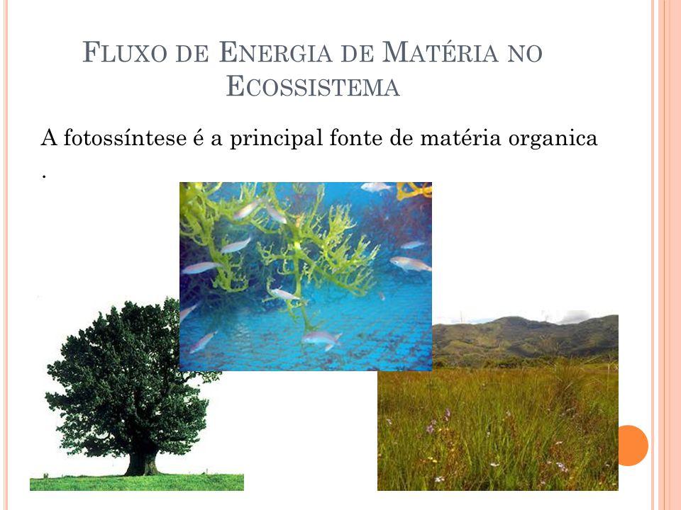 Fluxo de Energia de Matéria no Ecossistema